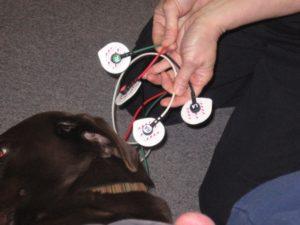 EKG Dog2